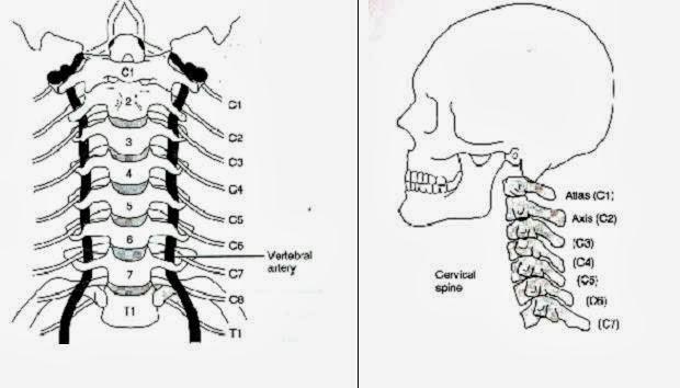 Coluna-cervical